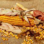 Corn for Cornhole